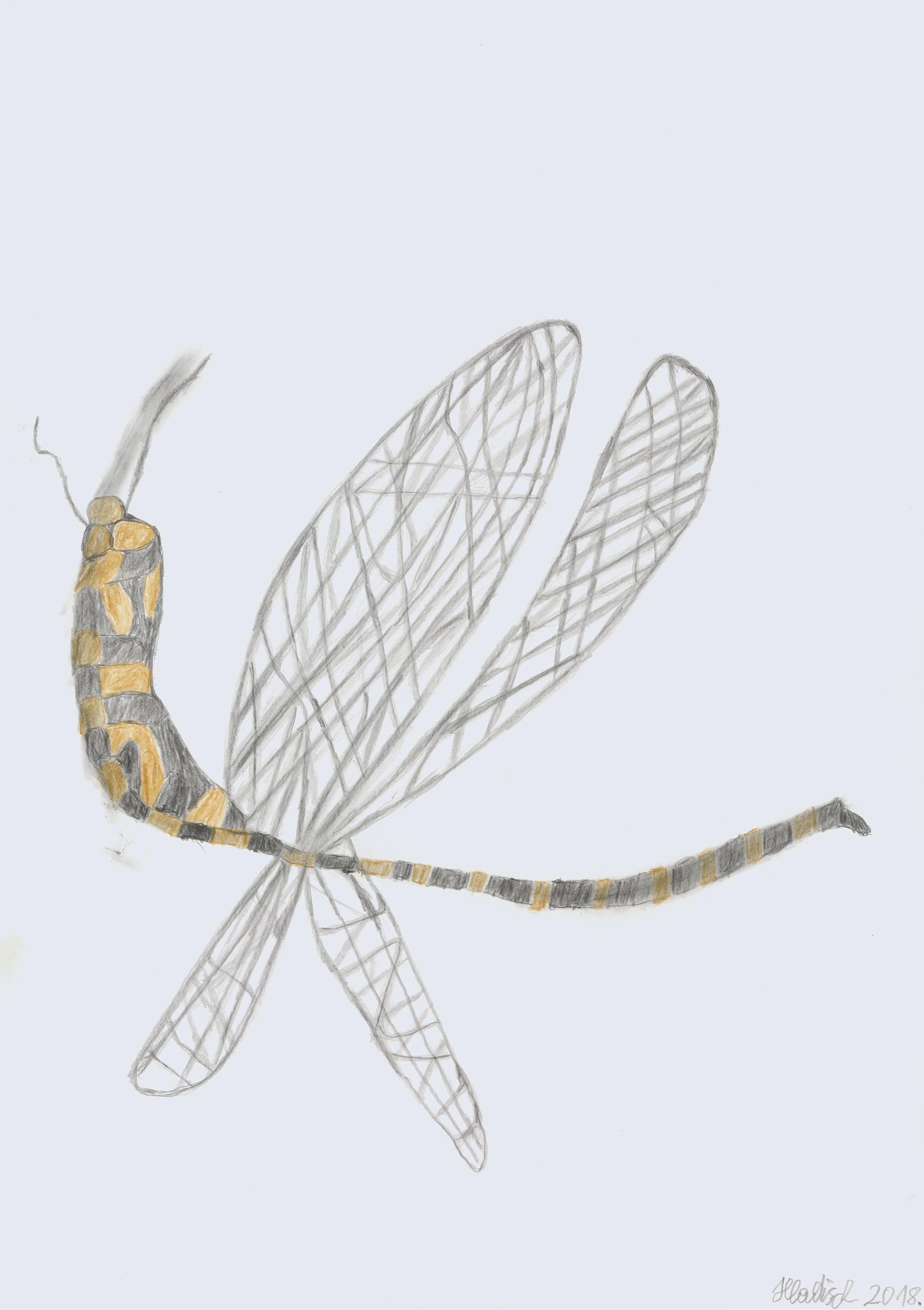 hladisch helmut - Lybelle / Dragon fly