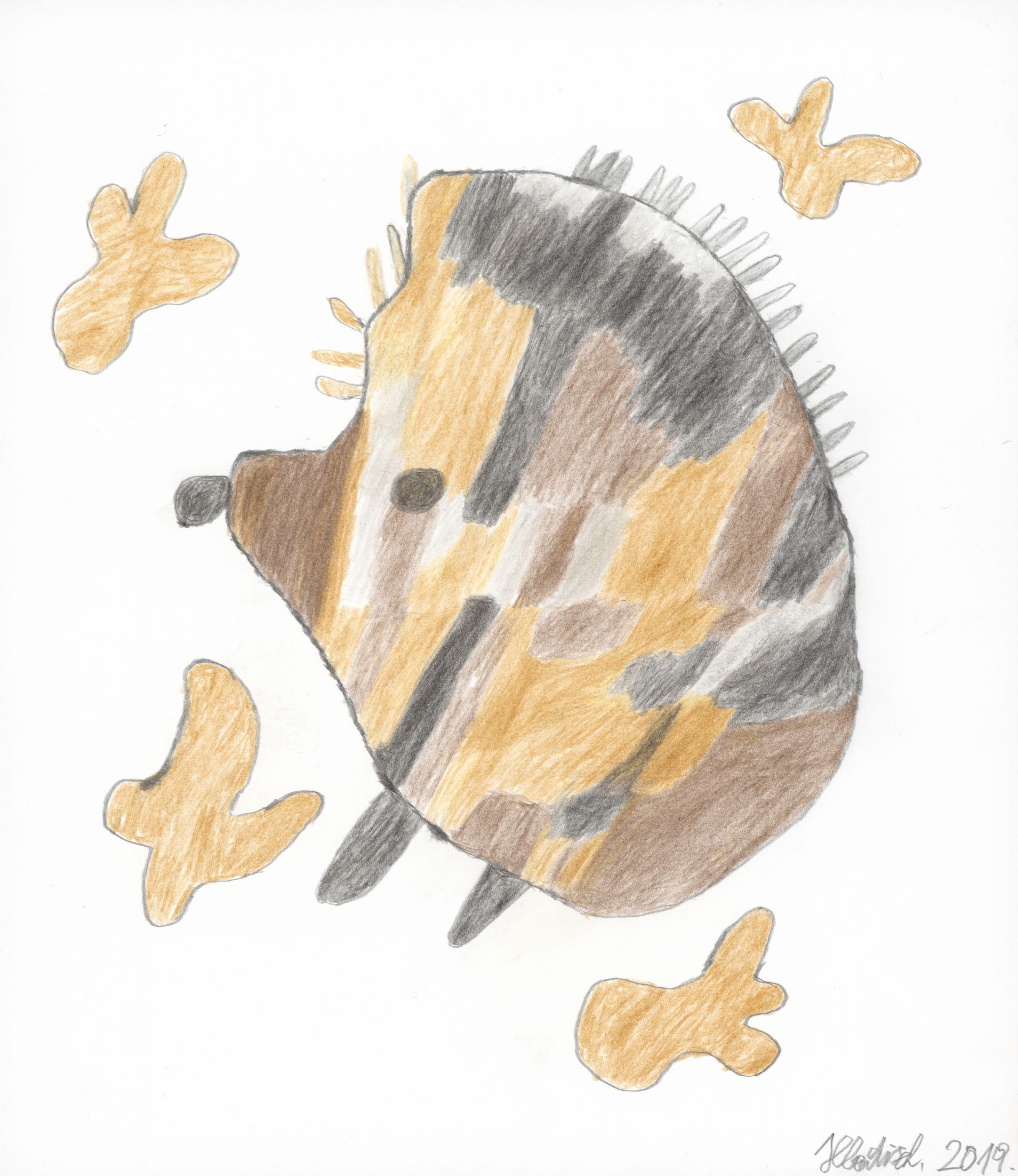 hladisch helmut - igel / hedgehog