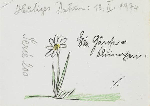 Ein Gänseblümchen / A daisy