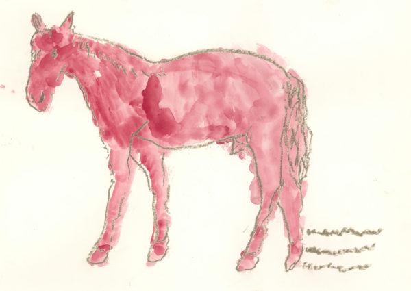 Pferd / Horse - kamlander franz