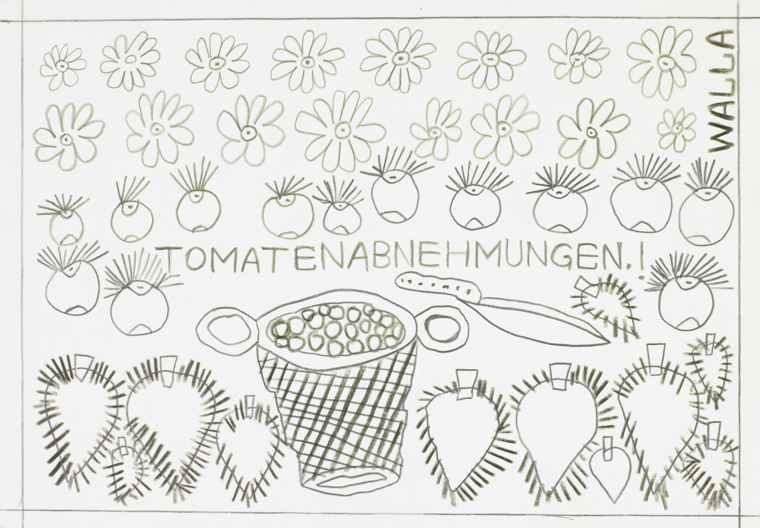 walla august - TOMATENABNEHMUNGEN.! / TOMATO PICKUPS.!