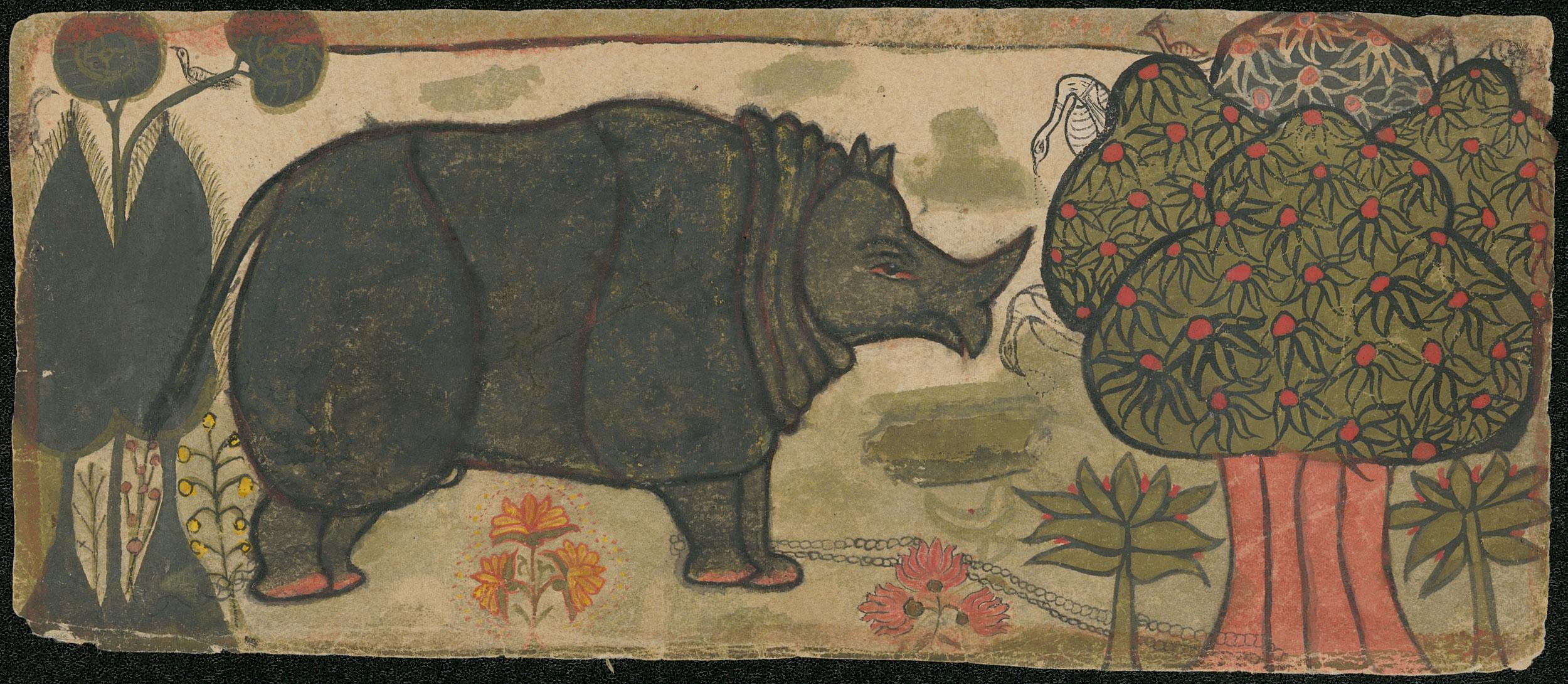 anonym - Nashorn / Rhinoceros