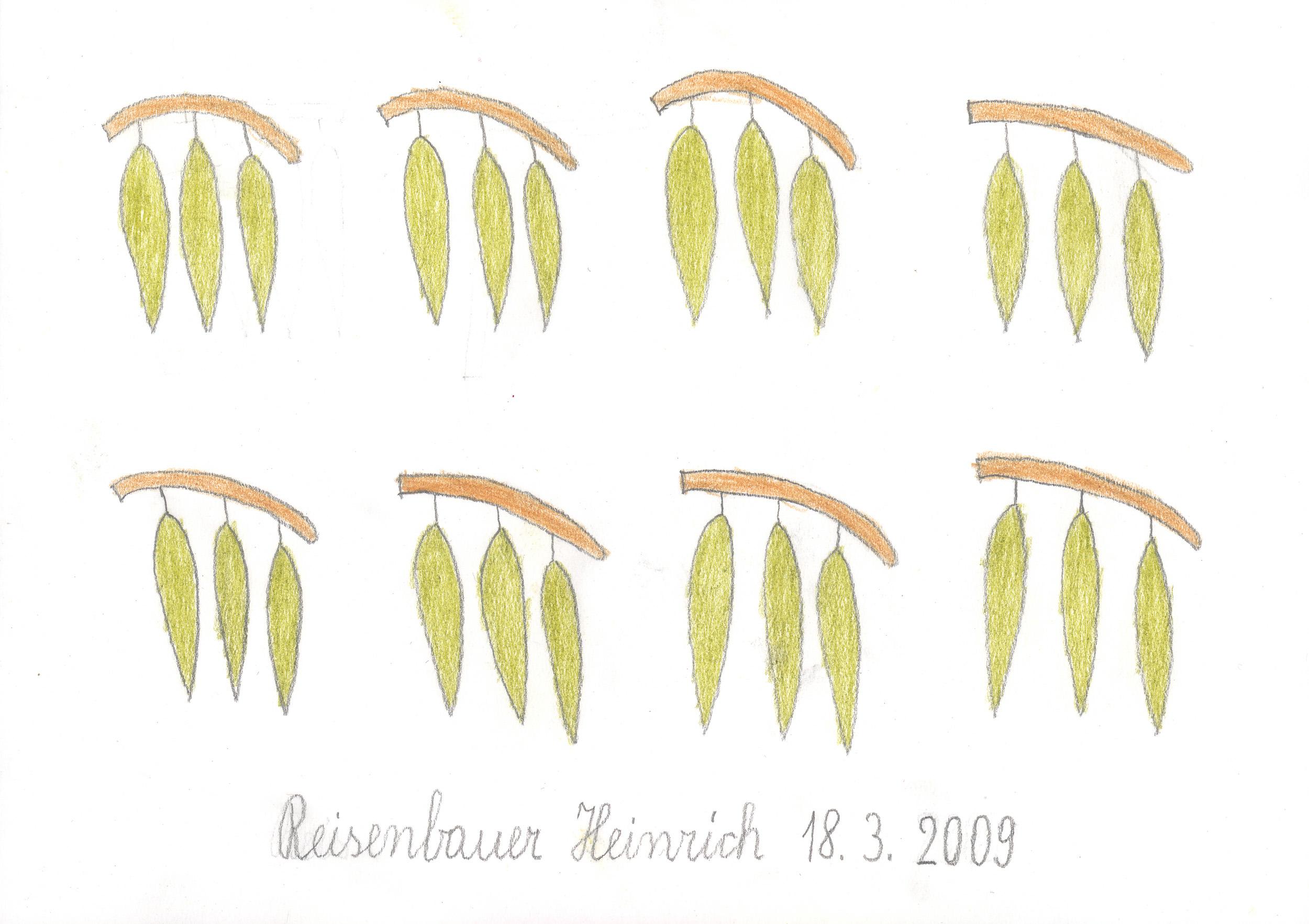 reisenbauer heinrich - blätter / leaves