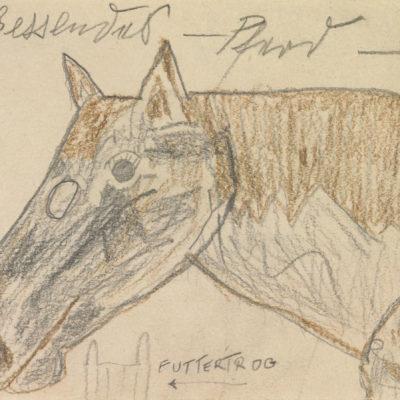 Fressendes Pferd / Munching horse