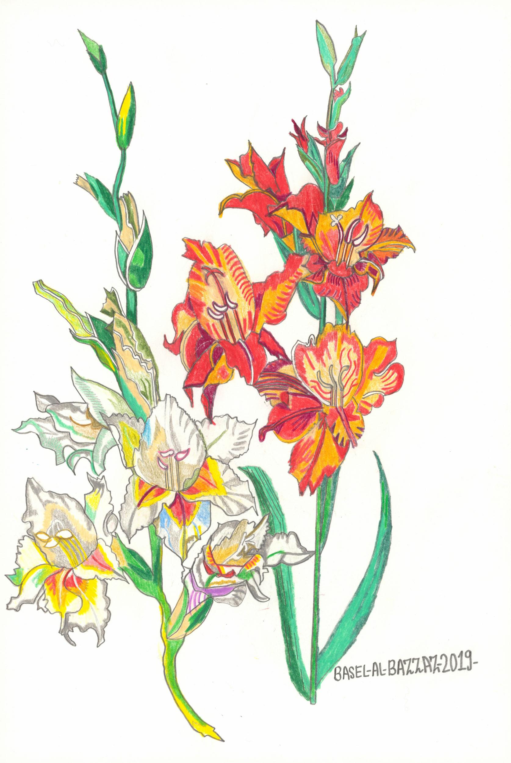 al-bazzaz basel - Iris