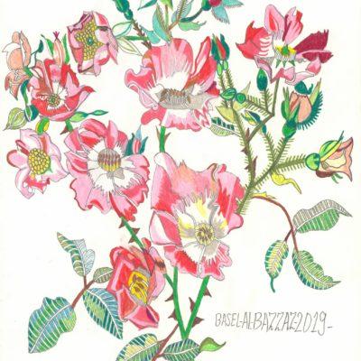 Heckenrose / Dog rose