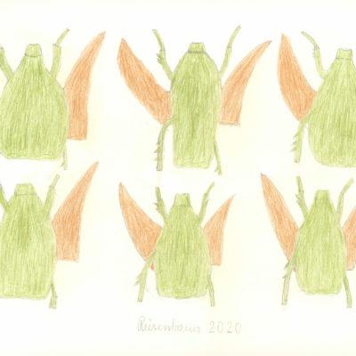 Käfer / Beetle