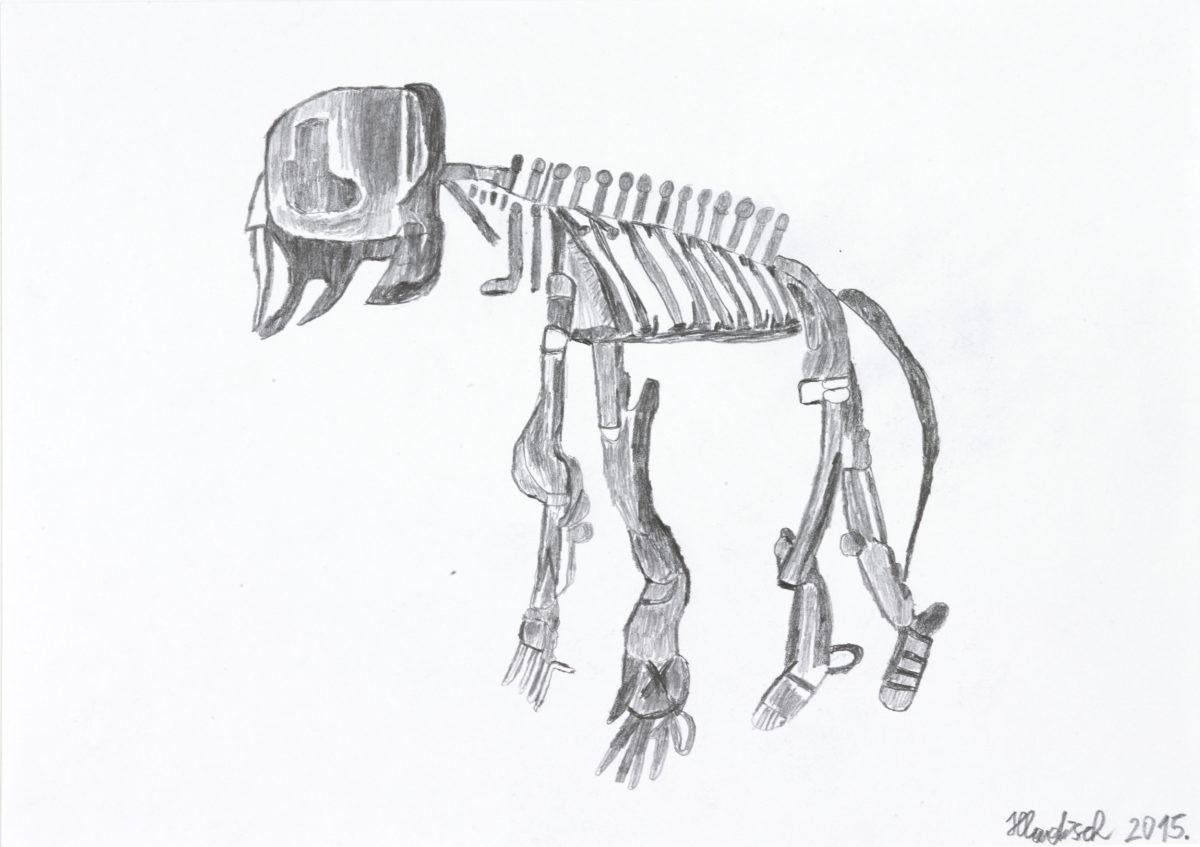 Babyelefantenskelett / Baby elephant skeleton