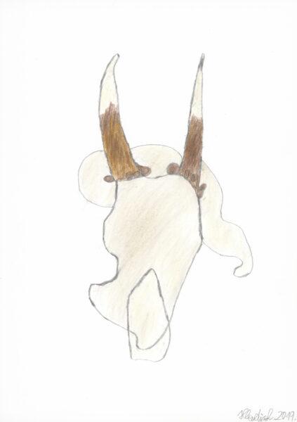 Knochenskelett / Bone skeleton